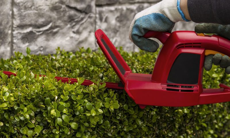 How to maintain hedges