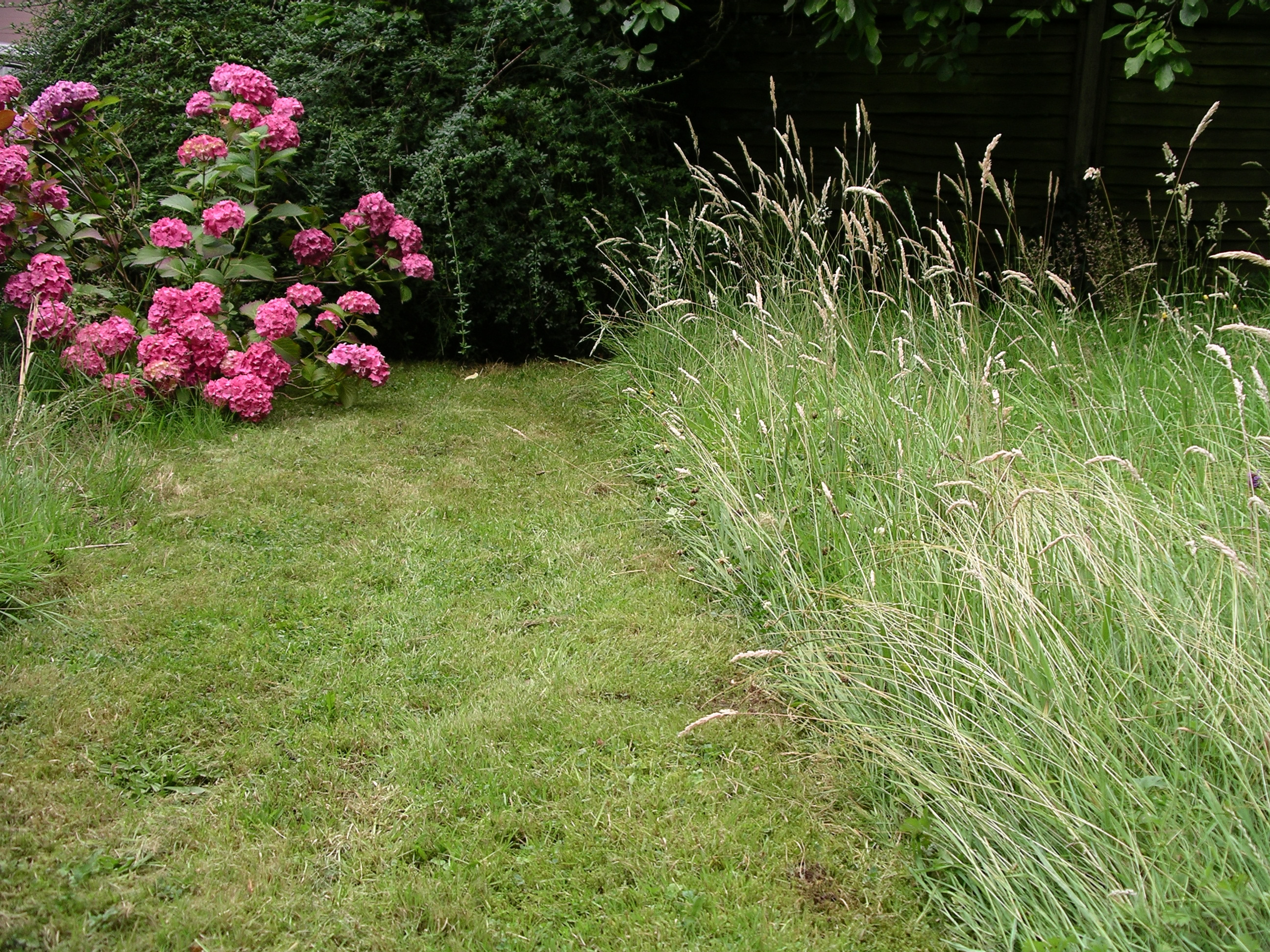 decorative lawn services ocala, fl