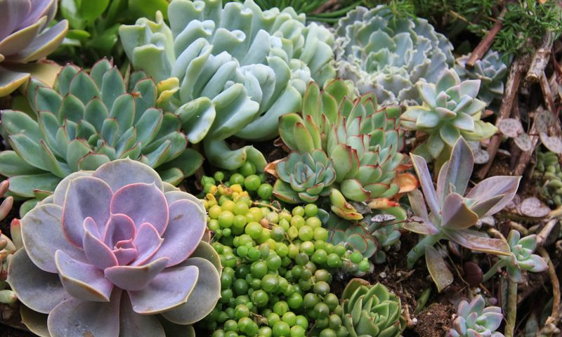 Maintain and Care for Succulents
