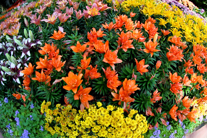 Exper Advice on Fall Flower Management Image