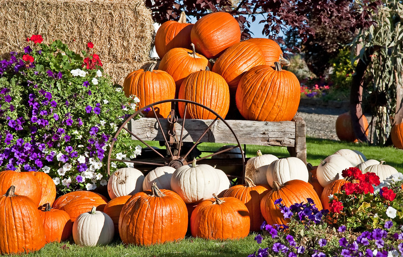 Fall Décor and More For Your Lawn