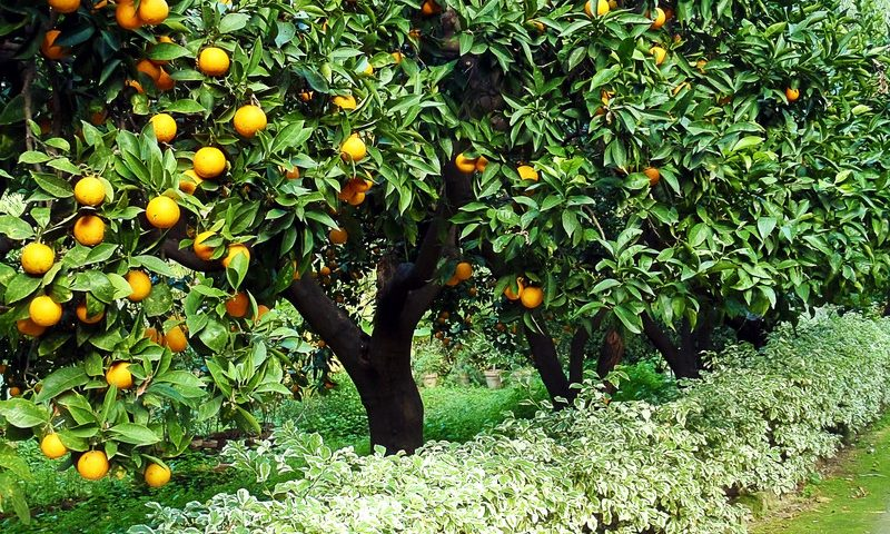 Plant & Care For Home Fruit Trees