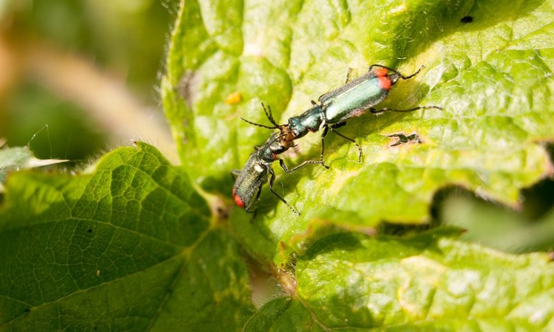 Complete Guide to Beneficial Insects Part I
