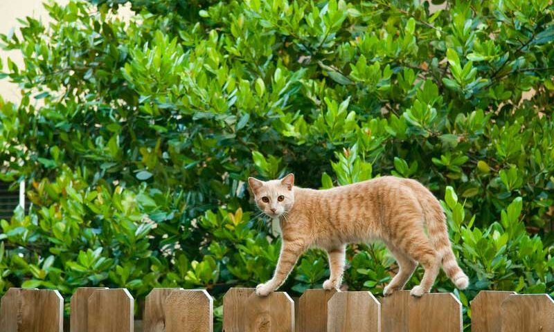 Fences Help Protect Pets and Lawns