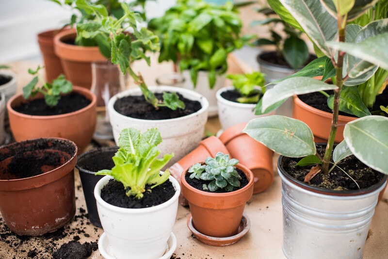 Expert Advice on Planting an Indoor Herb Garden