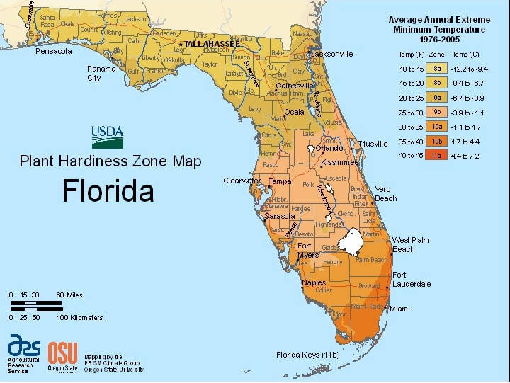 Florida's Hardiness Zones and What This Means