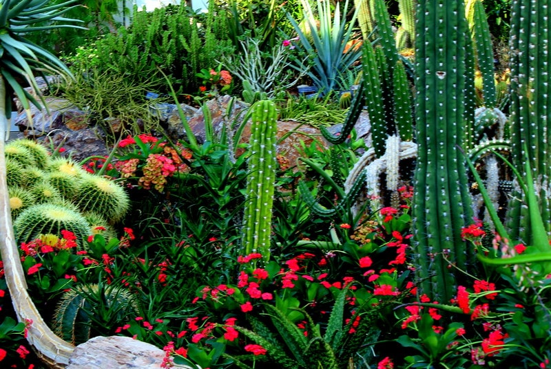 Cactus Gardening in Florida